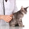 Ветеринарные клиники в Березайке